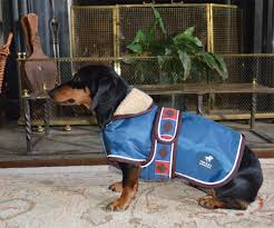 chukka dog apparel